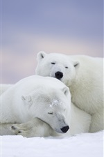 Alaska, os ursos polares, sono, neve iPhone Wallpaper