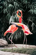 Dois flamingos iPhone Wallpaper